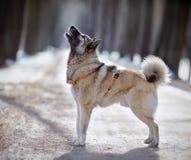 Der Abstreifenhund auf Weg im Winter Stockbilder