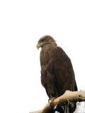 Der Adler Lizenzfreie Stockfotos