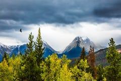 Der Adler fliegt über die schneebedeckten Berge Lizenzfreie Stockbilder