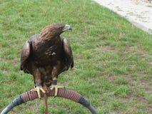 Der Adler lebte Eingelassenes Nitra-Schloss Stockfotos