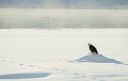 Der Adler sitzt auf Schnee auf dem gefrorenen Fluss Lizenzfreie Stockfotografie