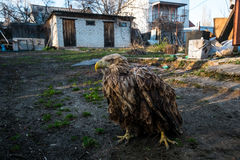 Der Adler sitzt aus den Grund Stockbilder