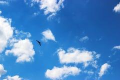 Der Adler steigt im Himmel an und bewölkt Hintergrund Stockfotografie