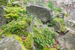 Der Adlerfarn in der alten Steingrube Stockfoto
