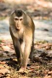 Der Affe Stockfotografie