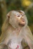 Der Affe Stockbild