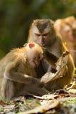 Der Affe Lizenzfreies Stockfoto