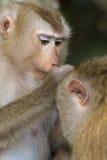 Der Affe Lizenzfreie Stockbilder