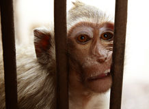 Der Affe Stockfoto