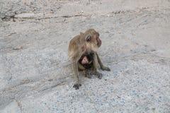 Der Affe Lizenzfreies Stockbild