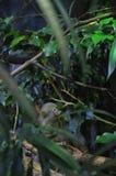 Der Affe auf dem Baum Lizenzfreie Stockbilder