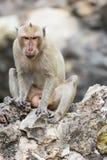 Der Affe auf dem Felsen Lizenzfreie Stockfotos