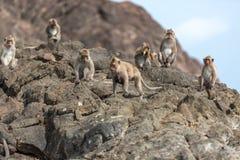 Affe auf den Felsen Stockfoto