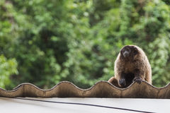 Der Affe, der die Leute aufpasst, bewegen sich in einen Park lizenzfreie stockbilder