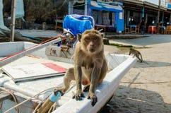 Der Affe, der im Boot auf dem Strand auf dem Hintergrund des Cafés sitzt Stockfotografie