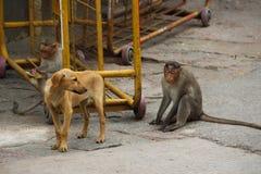 Der Affe in der Stadt von Indien Stockbild