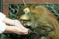 Der Affe drückte gegen die Frau ` s Hand Lizenzfreies Stockbild