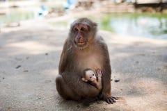 Der Affe hält das Junge in seinen Armen Wilde Natur thailand Lizenzfreies Stockbild
