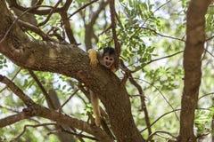 Der Affe im Baum Lizenzfreie Stockfotografie
