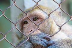 Der Affe im Gefängnis Lizenzfreie Stockbilder