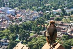 Der Affe im swayambhunath, Kathmandu, Nepal Lizenzfreie Stockfotos