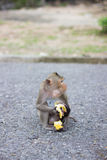 Der Affe isst Banane und Babyaffe ist Trinkmilch Stockbild