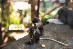 Der Affe isst, das monkey& x27; s-Junges isst Lizenzfreies Stockbild