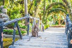 Der Affe isst eine Banane in einem tropischen Garten Lizenzfreie Stockfotografie