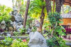 Der Affe isst eine Banane in einem tropischen Garten Lizenzfreie Stockfotos
