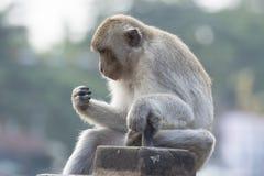 Der Affe leben in der Stadt Lizenzfreies Stockbild