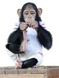 Der Affe lokalisiert auf weißem Hintergrund Lizenzfreies Stockbild