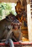 Der Affe mit Buddha im Hintergrund Lizenzfreies Stockbild