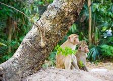 Der Affe sitzen aus den Grund im grünen Wald Lizenzfreie Stockbilder