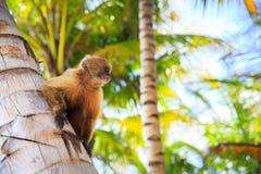 Der Affe sitzt auf einem Baumstamm Stockfoto