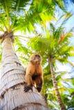 Der Affe sitzt auf einem Baumstamm Lizenzfreies Stockfoto