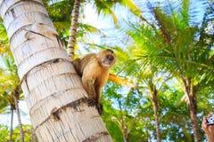 Der Affe sitzt auf einem Baumstamm Lizenzfreie Stockfotos