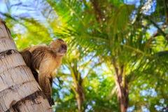 Der Affe sitzt auf einem Baumstamm Lizenzfreie Stockbilder