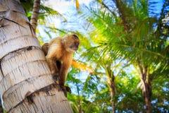 Der Affe sitzt auf einem Baumstamm Lizenzfreies Stockbild