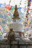 Der Affe sitzt auf einem buddhistischen nepalesischen stupa lizenzfreies stockbild