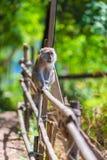 Der Affe sitzt auf einem Zaun an einem sonnigen heißen Tag Lizenzfreies Stockfoto