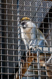 Der Affe sitzt in einem Käfig des Zoos Stockfoto