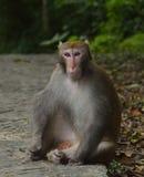Der Affe starrt entlang Sie an Stockbild