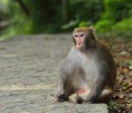 Der Affe starrt entlang Sie an Lizenzfreies Stockfoto