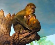 Der Affe trank die Milch Stockbild