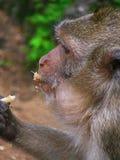 Der Affe und die Nuss Lizenzfreie Stockbilder