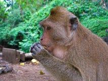 Der Affe und die Nuss Stockfoto