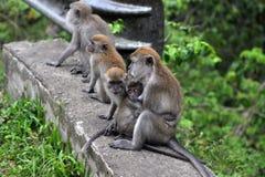Der Affe zieht das kleine Baby ein Stockbild