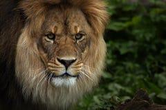 Der afrikanische König Lizenzfreies Stockbild