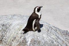 Der afrikanische schlafende Pinguin, Flusssteine setzen, Südafrika auf den Strand Stockbild