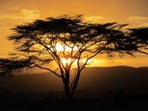Der afrikanische Sonnenuntergang Lizenzfreies Stockbild